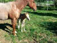 2 for 1 Broodmare package