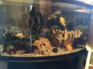 49 gal bowfront with EVERYTHING incl