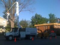 - UTILITY ARBORIST FOR HIRE 24/7. FULLY INSURED