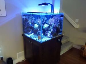 90 Gallon saltwater cube with overflow and custom stand