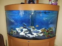 jewel 190ltr corner fish tank with malawi complete set up
