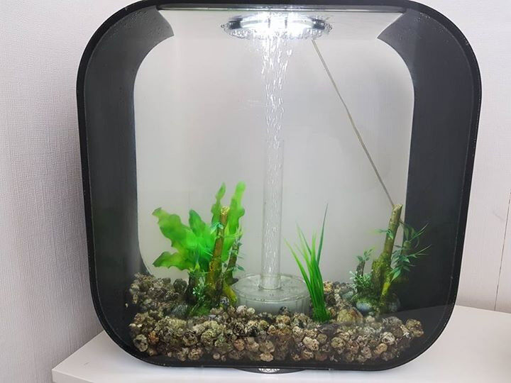 BiOrb Life 30ltr Aquarium in Black - full set up and additional heater added if required....