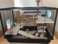 6mth old Syrian Hamster with Cage and Accessories