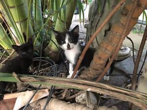 Kitten, male, to GIVE AWAY Woodville North Charles Sturt Area Preview