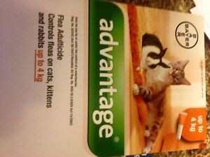 Flea treatment for dogs, cats and bunny London Ontario image 2