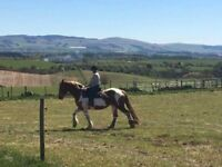 Beautiful 15.3 coloured mare for sale