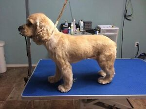 Clients wanted for dog grooming