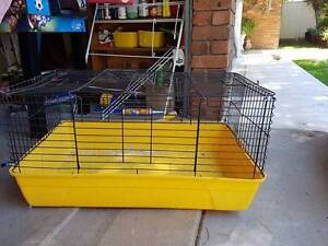 guinea pig gage Oxley Vale Tamworth City Preview