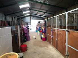 Livery spaces available on friendly yard