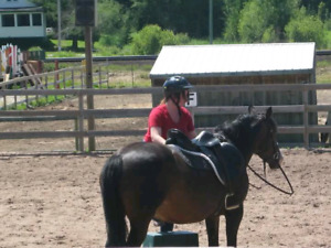 Looking for a horse training job