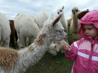 Canadian Alpaca Products Annual Open House