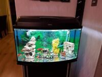 Fish Tank...100 litres...10 fishes...food...filter...decoration