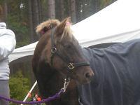 Certified Equine Sports Massage Therapist
