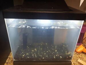 Fish tank, Great shape has night/day light & filter