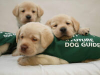 Purina walk for Dog Guides