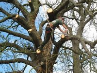 Professional Tree Surgeon (Free Quote)