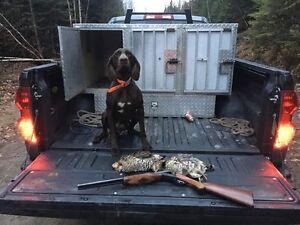Dog Box hunting dog transportation