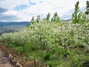8 flat fertile acres for sale or long lease, owner financing