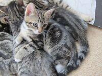 Kitten (boy)