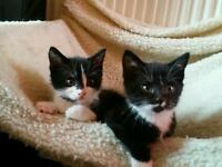 Sweet kittens looking for new home.
