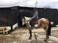 Help with any horses