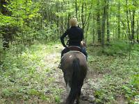 Pension pour chevaux  1 Mois gratuit!  St Lazare 45 min de MTL