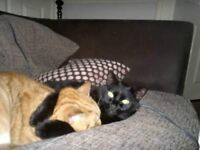 Male black cat missing in Eden Vale