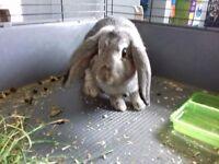 Female/male rabbits