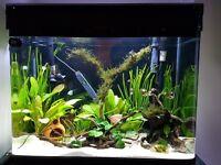 Aquarium Fish Tank 198L with LED lighting