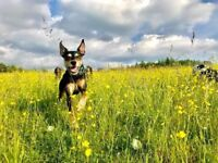 Paws N Pooches dog walking & pet sitting