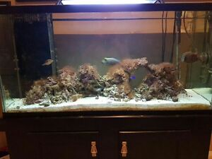 90 Gallon Salt Water tank & Fish