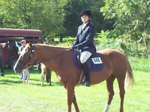 Looking to ride or train horses!