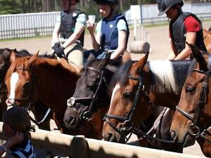 Your Place Riding Lessons