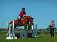 Price Reduced! Stunning Warmblood Mare- Dressage/Jumping