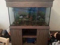 4ft fish tank with external pump and accessories