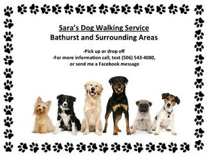 Dog Walking/Sitting Service