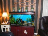 Stunning Aquarium / Fish Tank