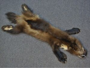 REAL Wolverine skin for sale