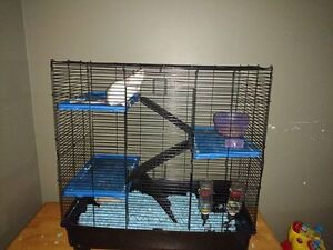 2 Female rats and 3 level cage