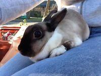 Two bunnies + hutch