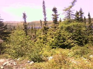 1 acre of land in Grandys pond (Burin Pen.)