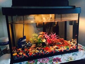 Small fish tank/aquarium with every thing
