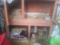 2boys guinea pig ad hutch
