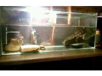 2 yellow bellied turtles