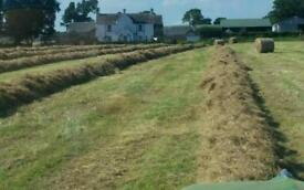 Hay /straw wanted