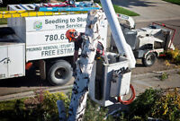 TREE REMOVAL/PRUNING/SERVICE: DISCOUNTS! Get Ready for SPRING!