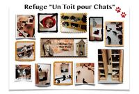 (443-5)  ADOPTION CHATS / CHATONS .. LAVAL