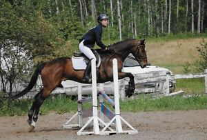 Full Motion Advantage -- Equine Massage Training and Sales