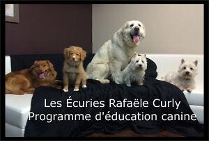 Programme d'éducation canine