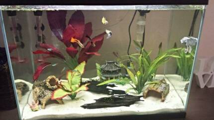 Fish tank, fish & extras!! Butler Wanneroo Area Preview